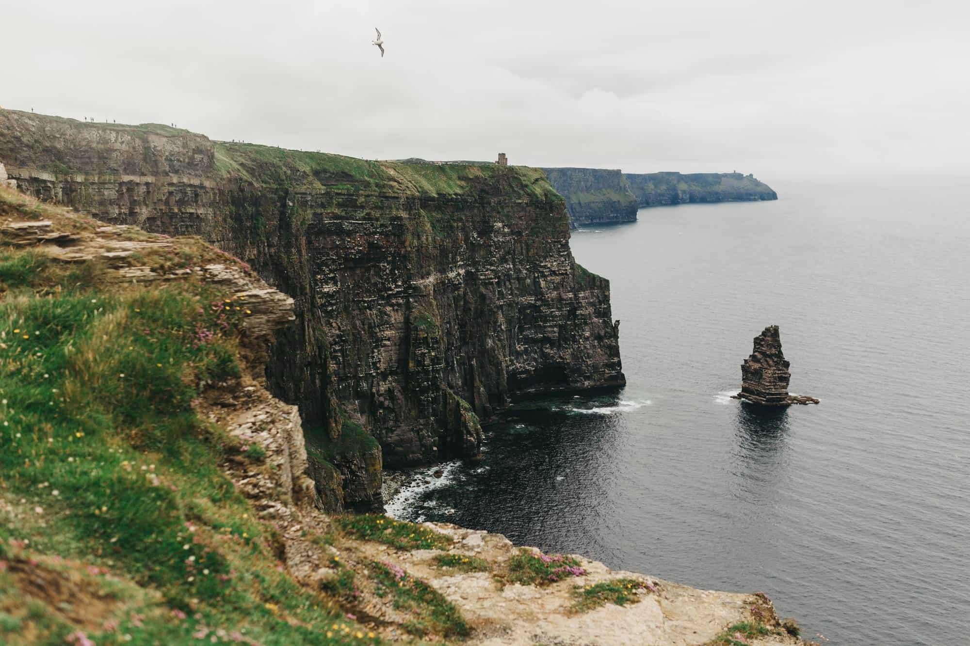 Proposal shoot Ireland Gulls